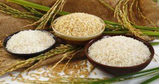 Sản phẩm gạo Việt Nam sẽ được đăng ký nhãn hiệu tại nước ngoài