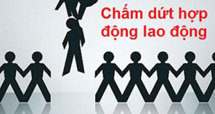cham-dut-ho-dong-lao-dong-dung-luat